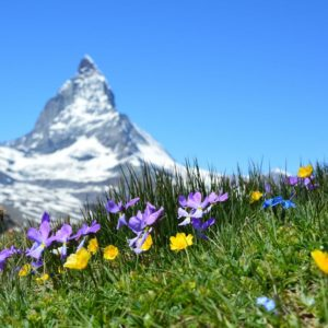 Happy Swiss National Day!